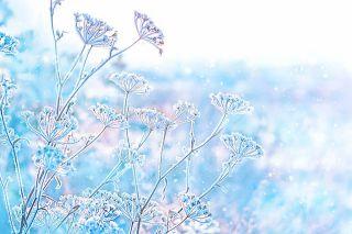 Foto: Winterwiese